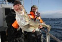 Fishing in Norway / Norway offers sea fishing holiday in a class of its own - simply world class!