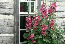[garden inspiration] / My dream of a naturalistic country garden.