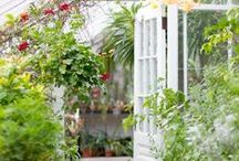 [greenhouses] / Dreaming of that special place for growing...