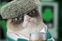The pick of grumpy cat