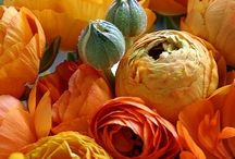 Orange/ oranje / Flowers and ideas