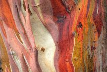 Treebark / All kinds of  treebark, with the beautiful textures and colors.