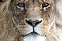 Animals Are Beautiful