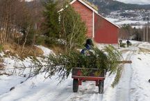 O Christmas Trees (andGIFs) / Beautiful sights! / by Julie Crowell