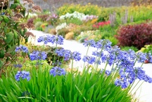 Traditionally beautiful / Visit the Longest Herbaceous Border in Ireland, featuring over 700 different varieties and plants and shrubs