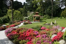 Japanese Enchantment  / The Japanese Garden, Powerscourt Gardens, Ireland