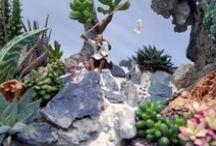 Succulente & cactus / gardening