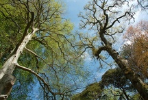 Trees at Powerscourt