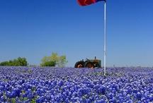 Love Texas! / by Linda Jacobson