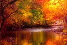 Shades of Autumn / by Barbara Ingold