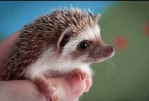 Hedgies / by Ashlee Marie