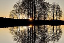 On Reflection / reflections / by Barbara Ingold