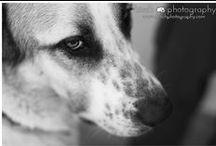 Animal photography - Birch Photography