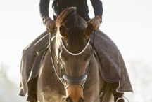 Horse Riding / My favorite hobby / by Future Focus