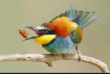 Gods most adorable creatures!