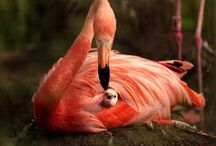 Nature & Fauna