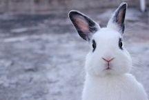 Rabbit'x'