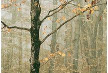 Trees Seasons / Trees Seasons