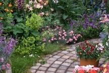 Gardening / by Nicole Rippy
