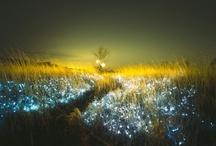 Light Installations / by Jennifer Noelle