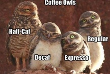 Owls / I love owls ....they're like cats with wings
