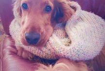Puppy ❤️❤️❤️ / Mi cachorro bello