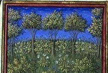 Iluminacje: rośliny / Drzewa i inne krzaki ze średniowiecznych manuskryptów.