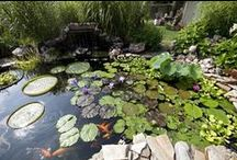 Ponds & Fish / Ponds and fish for your backyard