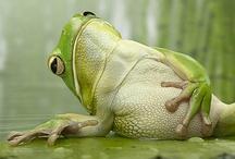 froggie went a walkin