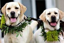 InNOLA Dogs and weddings