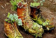 Gardening / Pretty plants