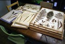Herbarium ideas