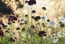 Perennials / by Fosca VdB