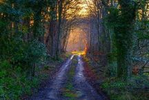Light in the forest / by Fosca VdB