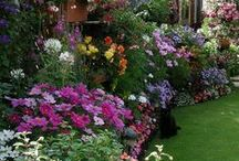 Floral Gardens, Favorite Gardens / So many beautiful flowers! / by Caribbean Cruises Travel Agent
