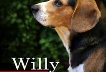 Beagle - Mr William