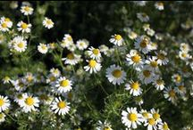 Den frodige have / Jeg elsker at være i haven, at nyde duften og farverne, at se livet spire, at få jord under neglene og at få fregner af solen. Fra forår til vinter er min dagligstue i vores baghave.
