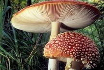 Mushrooms....