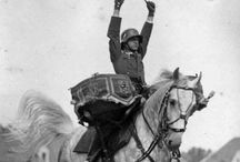War horses, donkeys and mules / History, animals in war conflicts