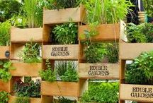 Cool Creative Edible Gardens / It's not your mother's garden anymore...functional herb gardens, limited space gardens,