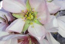 Arboles y Flores / Árboles y Flores de los alrededores de la aldea ecorural en castellon