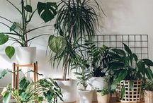 All things green / Bit of leafy green inspiration