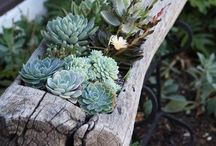 Cool Garden Ideas / Great ideas for gardens, from DIY to landscape designers!