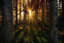 Skog og vann / Temaet skog og vann inneholder skog, bekker, vann og stier. Det ska være eventyrlige trekk og varme bilder.