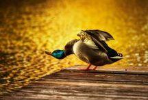 Dyrelivet / Temaet dyrelivt inneholder dyr og vann. Bildene skal ha bevegelse og varme.
