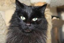 CRUadoptables / Adoptable cats at Cats R Us