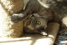 """Happy Tails! / Photos of Cats R Us cats in their """"furever"""" homes"""