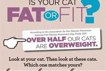 Healthy and Happy / Info about how to keep your cat healthy as well as how your cat can keep you healthy!