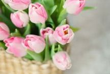 Pink + Green / http://www.judithdcollins.com/