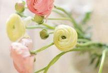 Yellow + Pink / http://www.judithdcollins.com/